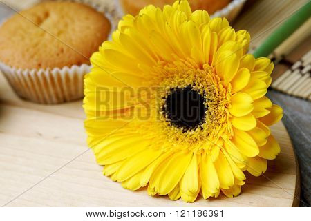 Yellow gerber and muffin on the wooden table