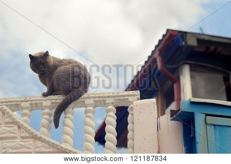 Fat Furry Cat Sitting On Fence Against Blue Sky