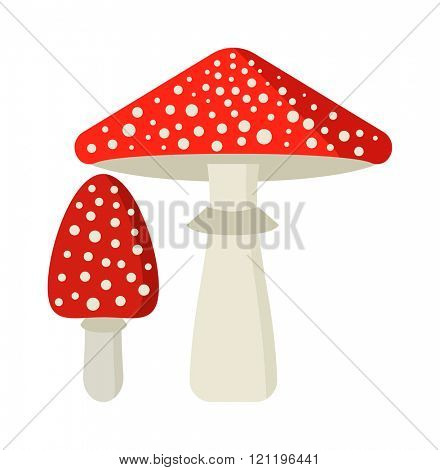Amanita poisonous mushroom, isolated vector amanita on white background. Fly agaric or fly Amanita mushroom, Amanita muscaria. Red fly agaric amanita muscaria isolated on white background.