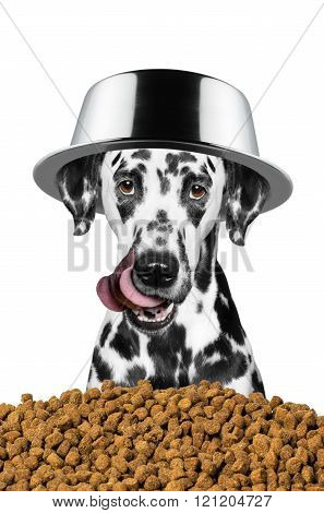 Dog With A Bowl On His Head Is Going To Eat