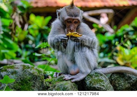 Little monkey eating