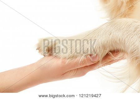 Feet of golden retriever and human hand, isolated on white