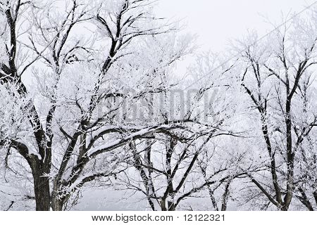 Snow covered trees with a stormy sky