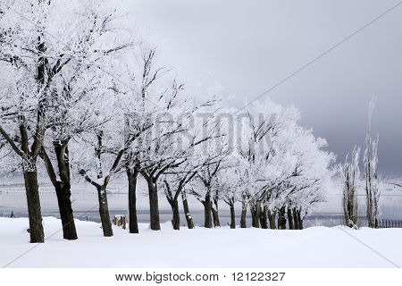 A row of snow covered trees with a stormy sky