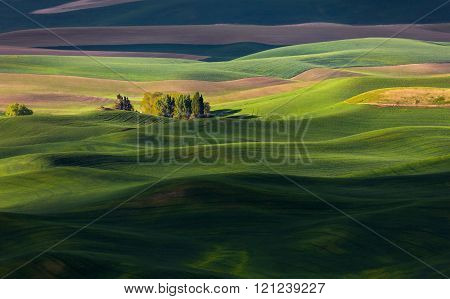 rolling hill and Farm Land in spring