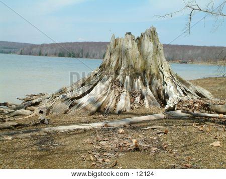 Stumped Lake