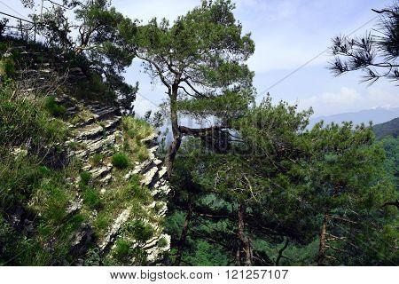 Beautiful trees