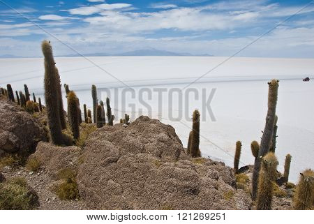 Photographs taken in the Isla del Pescado, Salar de Uyuni , Bolivia .