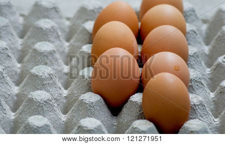 Eggs are laid on the paper tray for background