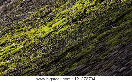 Green moss on a straw roof