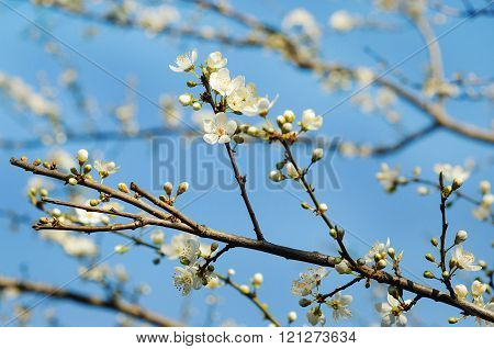Photo Of Blossoming Tree