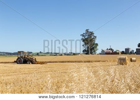 harvester works in wheat field in summer day in new zealand