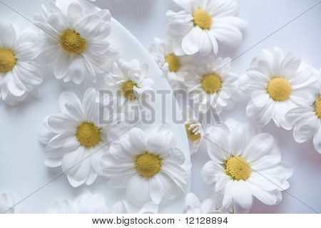 Camomiles blancos escasos en mesa y placa