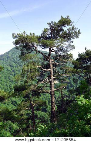 Beautiful picturesque tree