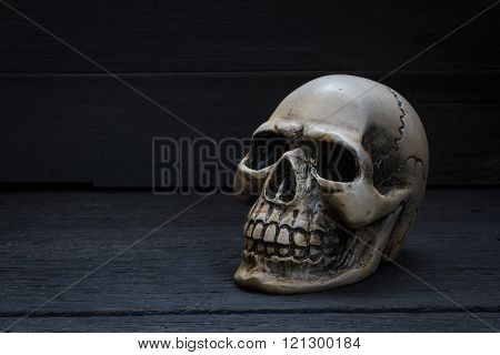 Still Life Photography  With Human Skull On Wood Background