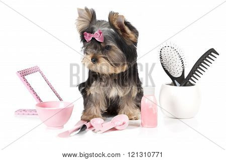 Yorkshire Terrier With Spa Accessories