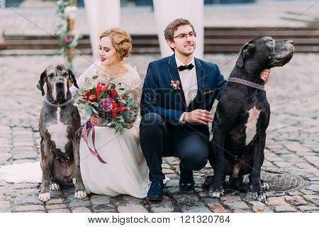 Attractive wedding couple sitting on their haunches on the pavement and holding two their purebred d