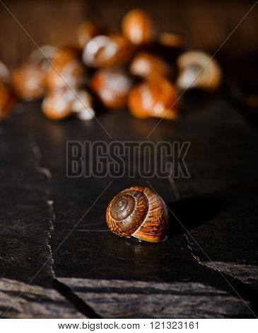 Snail Shell On Black Stone Next To Others
