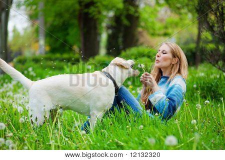 Beautiful woman with playful labrador on fresh green meadow