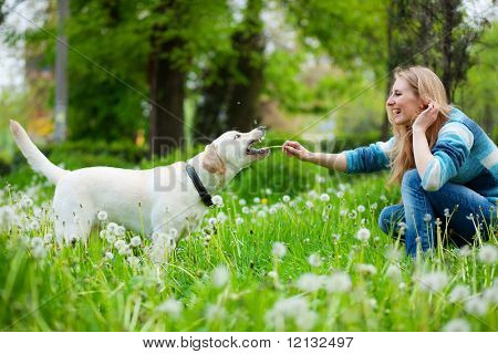 Beautiful woman with playful labrador on fresh green meadow