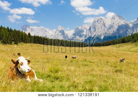Beautiful Alpine Panorama