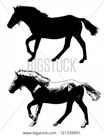horse silhouette and illustration - vector