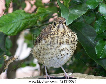 Fat Bird beak up