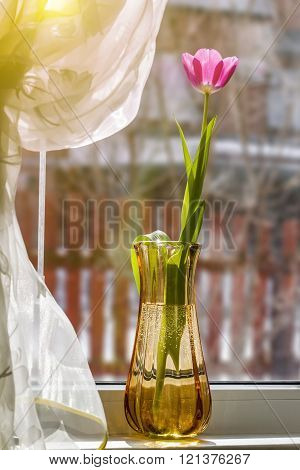 Tulip On A Window Sill