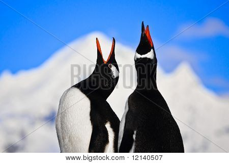 Penguins Singing