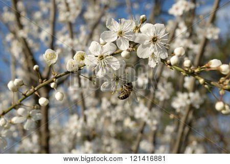 Bee On White Flower Tree