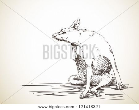 Sketch of dog scratching an itch, Hand drawn illustration