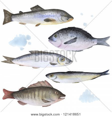 Set of 5 fish painted in watercolor