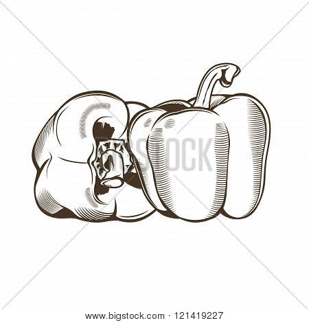 Bell-peppers in vintage style. Line art vector illustration