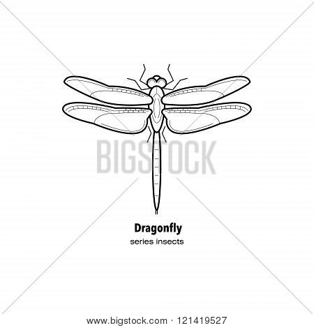 Vector illustration a dragonfly insect. Insect in a modern style mono line isolated on a white background. Black and white image of an insect.