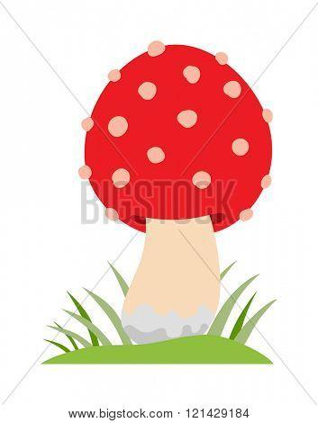 Amanita poisonous mushroom, isolated vector amanita on white background.