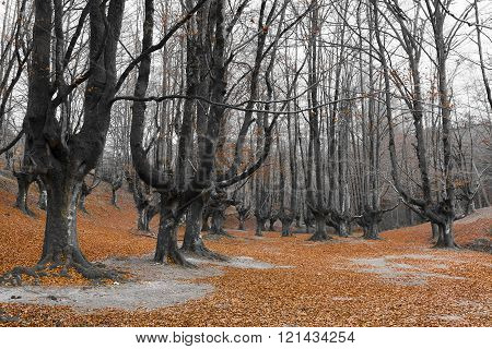 Forest of Otzarreta Alava Basque Country Spain
