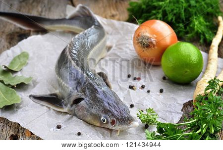 fresh sturgeon with vegetables and spices on wooden background.
