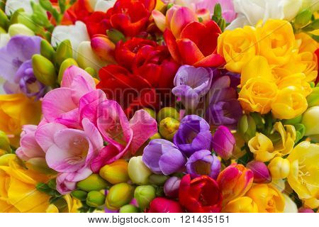 Fresh freesia flowers