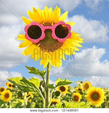 sunflower with pink sunglasses