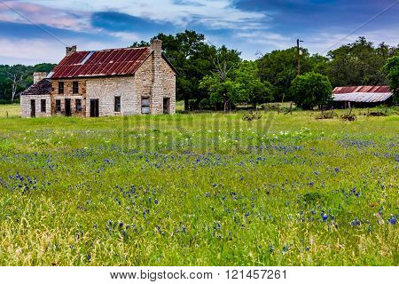 Old Abandonded Texas Homestead Farmhouse With Bluebonnets And Other Texas Wildflowers