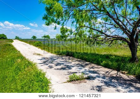 Old Texas Country Road with Willow Tree and Bluebonnets