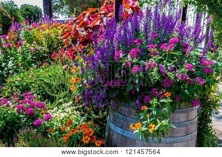 A Variety Of Garden Flowers