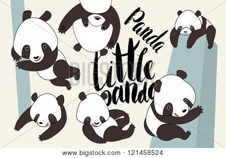 Little panda bear in various poses vector illustrated set with lettering Little Panda