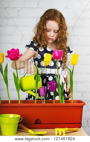 laughing little girl watering tulips flower from can.