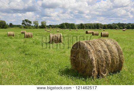 Hay Rolls In The Field