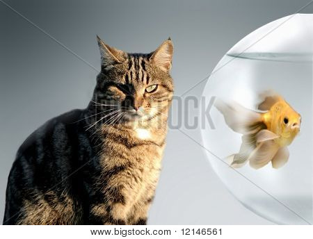 a cat and a fish