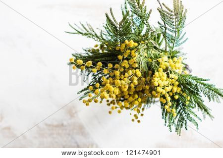 Bright Mimosa Flowers