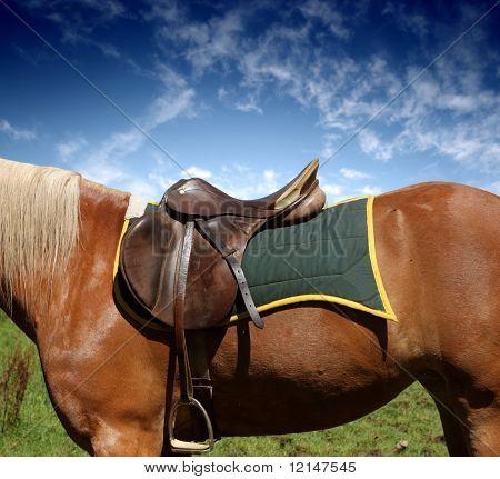a saddle on the horse