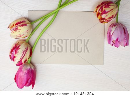 Tulips on a white background with space for text