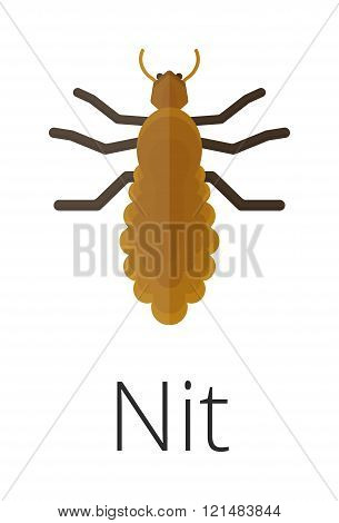 Nit skin parasite insect bug .